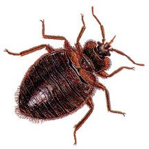 A Breakthrough in the Fight Against Bed Bugs?