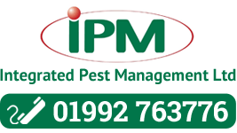5 Common UK Pests
