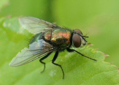 A Simply Warning About Flies